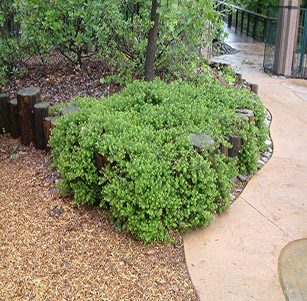 Native Ground Covers